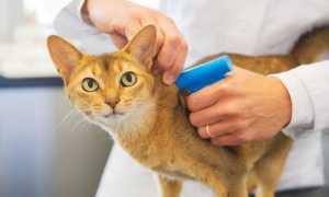 Податок на домашніх тварин в Росії в 2020 році — чи буде прийнятий