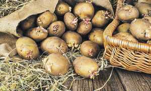 Посадка картоплі в 2020 році: календар коли садити за календарем