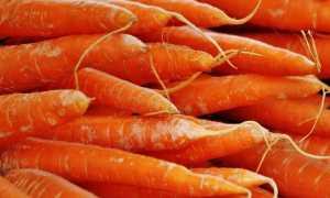 Посадка моркви в 2020 році: календар, коли садити